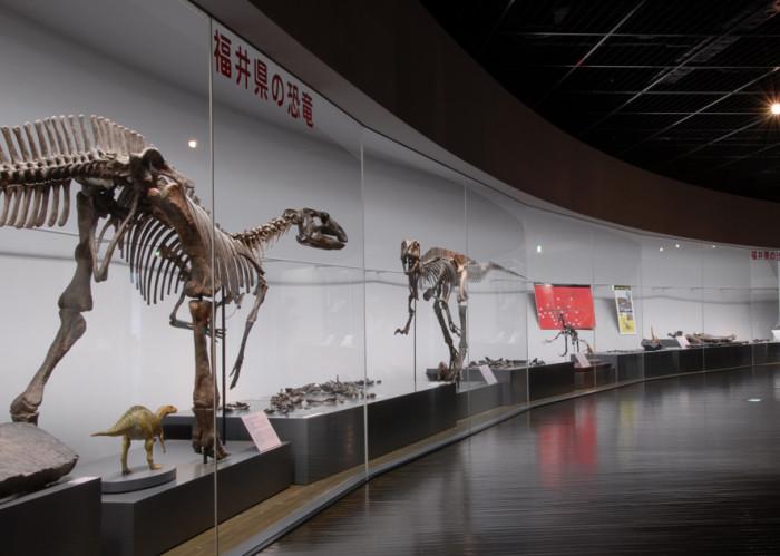 「福井の恐竜」展示