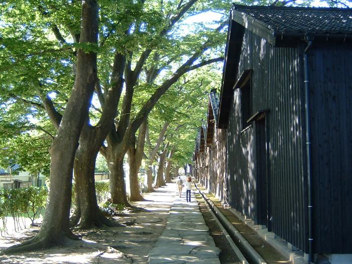 山居倉庫とケヤキ並木