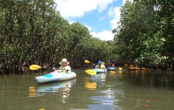 奄美の濃い自然をカヌーツアーで体験できる「黒潮の森 マングローブパーク」(道の駅奄美大島住用)