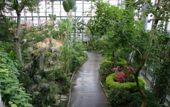 熱帯から高山まで世界の花2600種に大阪で出会える「咲くやこの花館」