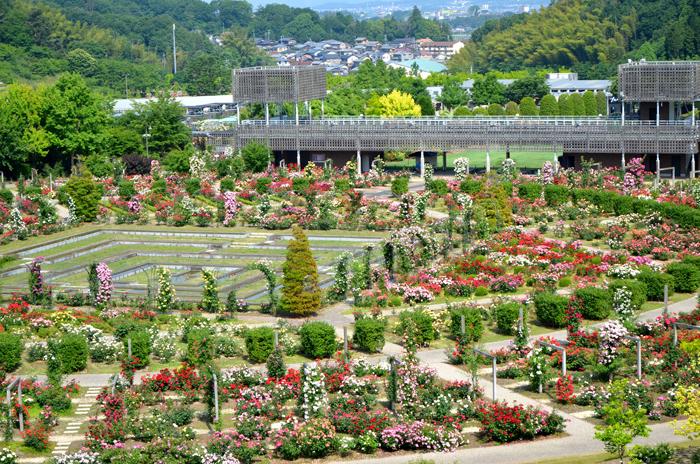 フォーマルガーデン・育種家のバラ園・オールドローズのバラ園