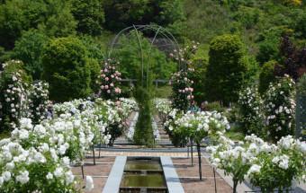 品種の多さ日本一!約7,000品種30,000株のバラが植栽されるバラ園がある『花フェスタ記念公園』