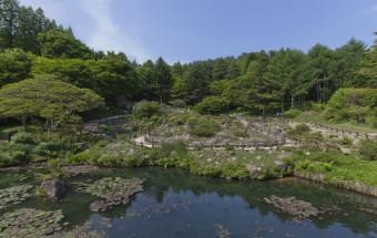 六甲山で花めぐり。世界の高山植物や寒冷地植物など約1,500種の草花と出合える『六甲高山植物園』