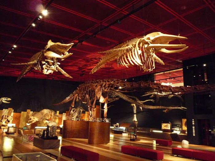 いわき市石炭・化石館 ほるる 化石展示室2