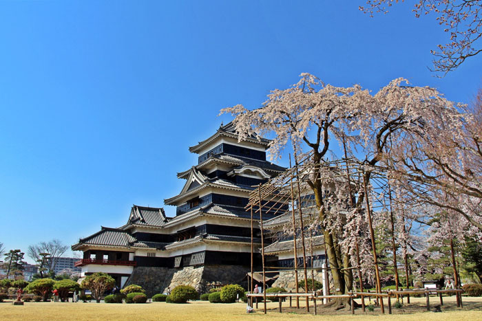 松本城 春 天守と駒繋ぎの桜