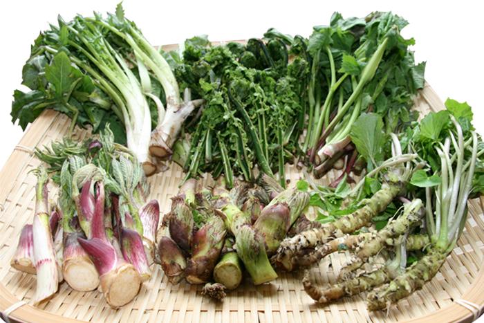 春-山菜類