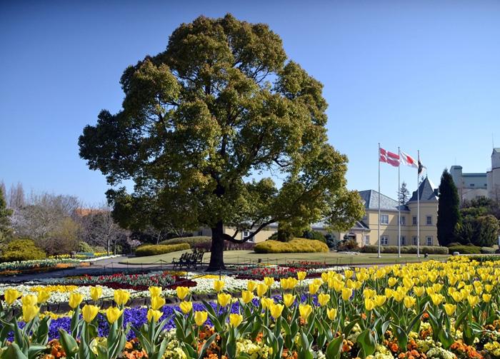 ヨーロッパ風お花畑(春)