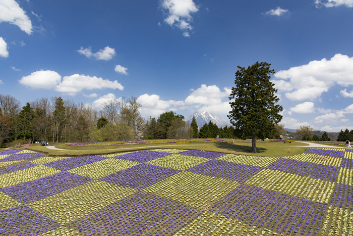 花の丘(春)