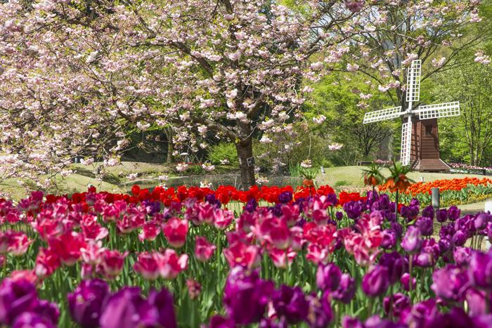 花の谷(春)