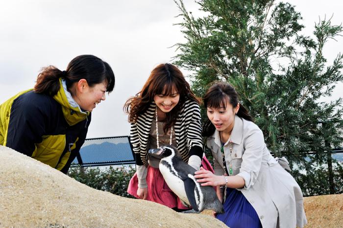 海響館 ペンギンタッチ
