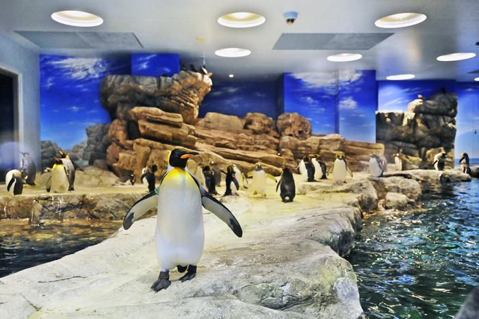 ペンギン村亜南極ゾーン