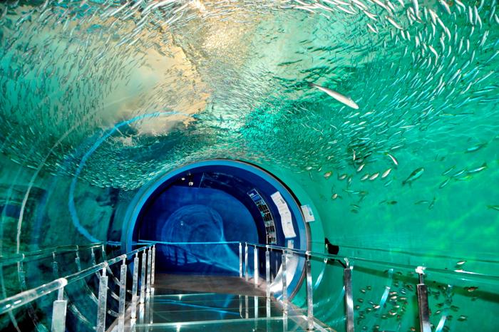 潮流水槽海中トンネル