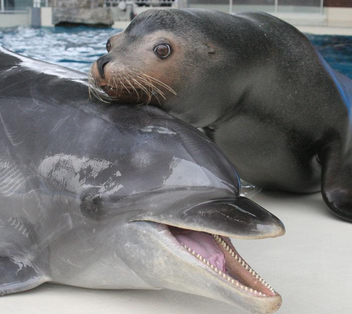 海響館 イルカとアシカ