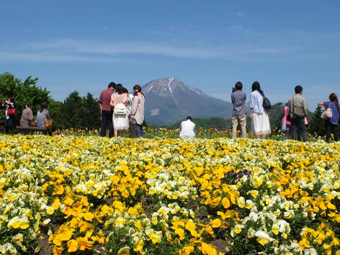 花の丘パンジー